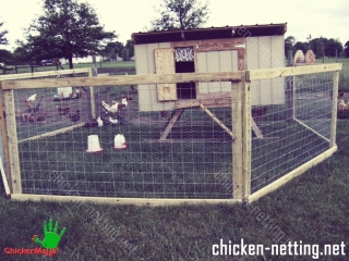 Chicken wire is one of the most used item for creating a safe place for chicken.