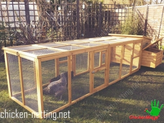 A chicken wire fence can be installed around the yard, allowing the birds free ranging and foraging.